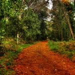 Parco-la-foresta