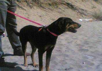 Adotta un cane altro caso al canile di latina luna - Portare il cane al canile ...