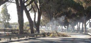 pontina alberi bruciati
