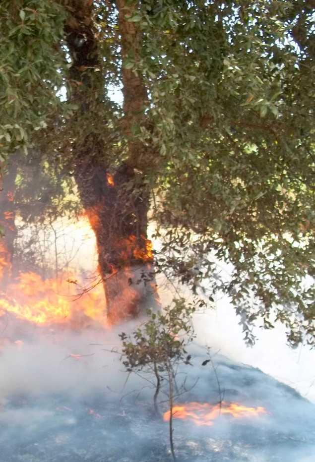 albero bruciato