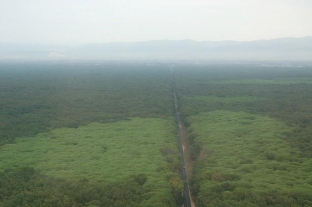 La foresta del Parco nazionale del Circeo (foto d'archivio - visuale dall'elicottero della Forestale)