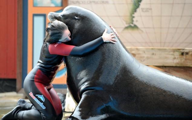Vito il leone marino abbracciato ad una addestratrice