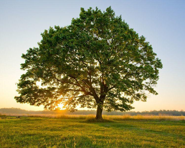 Festa dell'albero, a Latina si pianta al centro diurno Salvatore Minenna | Luna Notizie - Notizie di Latina - Lunanotizie