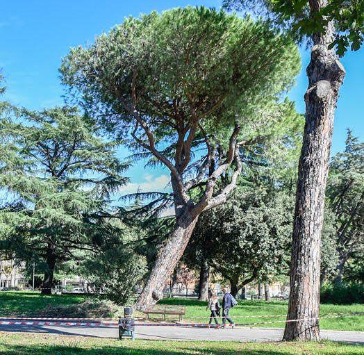 albero-pericolante