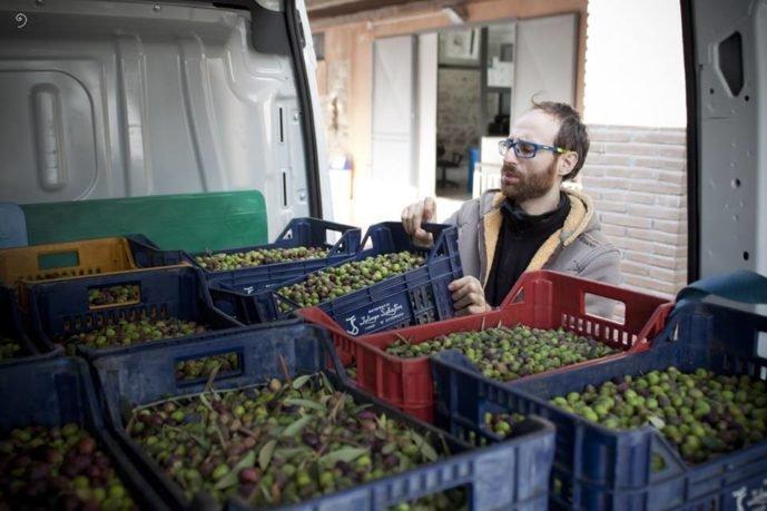 L'imprenditore Cosmo Di Russo presidente dell'Aspol controlla le olive raccolte e pronte per la spremitura